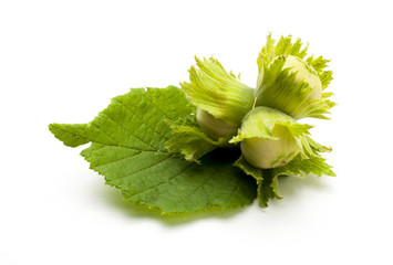 Unripe hazelnuts with leaf isolated