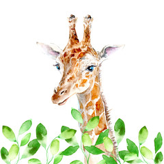 Yellow giraffe and leaves portrait.Watercolor hand drawn illustration.White background.African animals illustration.