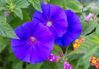 Colourful Mediterranean floral displays