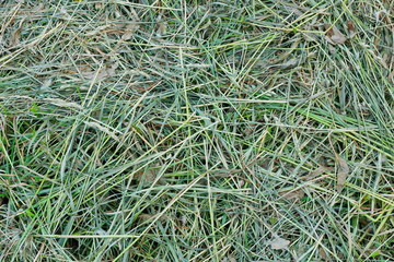 mown grass hay texture background