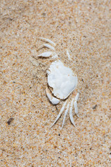 faded white crab crust covered with sand; view from above