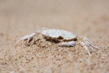 faded white crab crust covered with sand