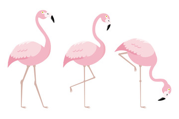 set of flamingo birds. vector isolated