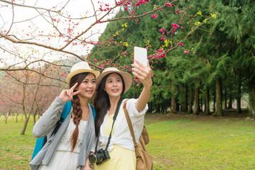 ladies takes selfies under the cherry tree