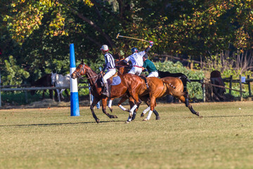 Polo Riders Horses Game Action
