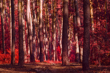 red autumn forest terrible and spectacular no one around