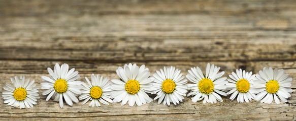 Panoramic image of daisy flowers on rustic wood Wall mural