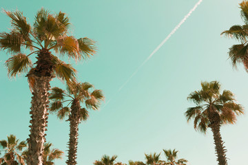 Beautiful palm trees and sky. Natural tropic background with copy space for text.