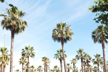 Beautiful palm trees and sky. Natural tropic background.