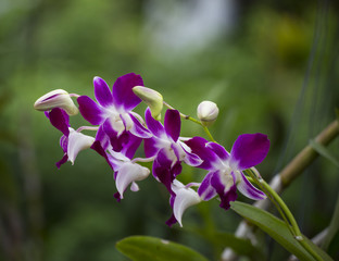 Flower of wild violet and white orchid