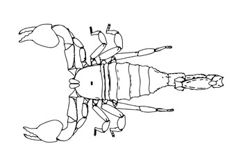 scorpion vector outline