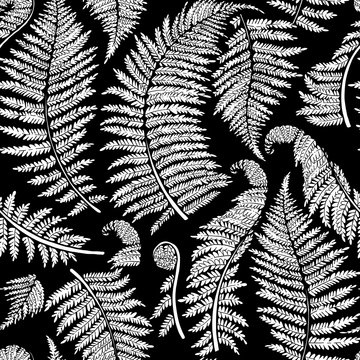 Graphic fern leaves