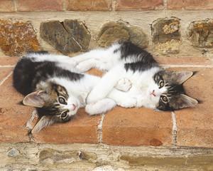 amore coppia di gattini belli dormono si abbracciano