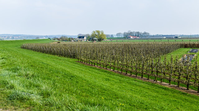 Dutch river landscape near Wageningen in Gelderland