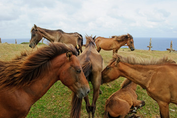 Herd of horses at meadow