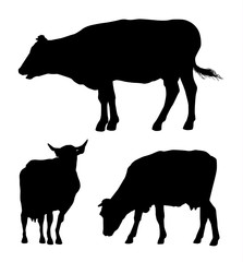 Vector set of black silhouettes of cow isolated on white background