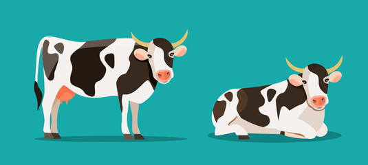 Spotted cow is standing and lying isolated. Vector flat style illustration