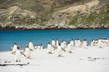 Colony of penguins at beach