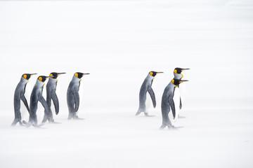Penguins walking on sand