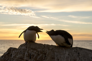 Penguins at sunset