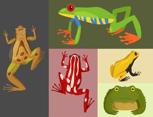 Frog vector cartoon tropical wildlife animal green froggy nature funny illustration toxic toad amphibian.