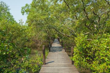 Wooden walk way thorough beside big tree
