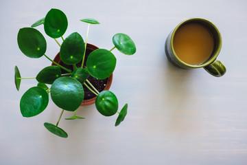 Pilea Plant and Coffee Mug on Grey Table