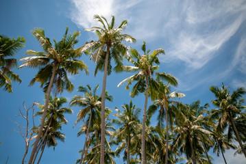 Palm trees against blues sky on a tropical island