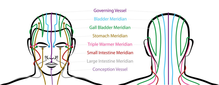 Meridians of the head with acupuncture points - anterior and posterior view. Traditional Chinese Medicine. Isolated vector illustration on white background.