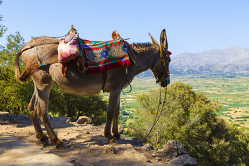 Photo sur Plexiglas Ane Tourists transported by donkeys to the Mount near to Zeus cave, Crete, Greece