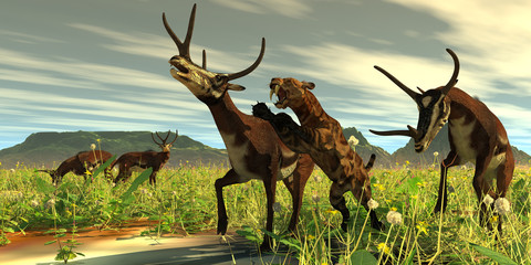 Kyptoceras attacked by Saber-toothed Cat - A Saber-toothed Cat comes out of high vegetation to attack a Kyptoceras deer during the Pleistocene Period. Wall mural