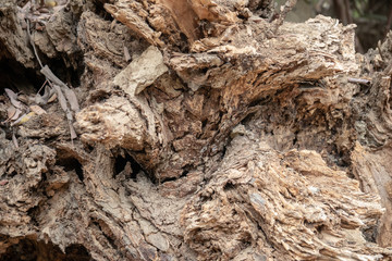 close up of decaying tree stump