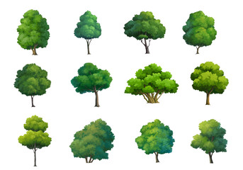 Illustration of trees  isolated on white background.