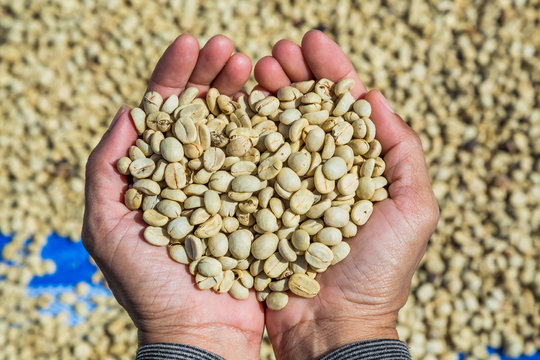Coffee beans with parchment skin