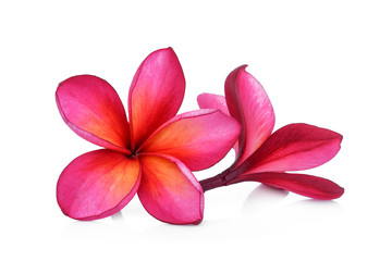red frangipani flower isolated white background