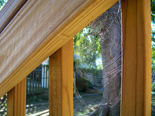 Spider Web in Wood
