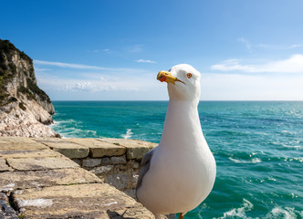 Seagull on the Cliff - Liguria Italy