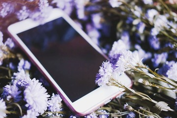 Smartphone on Purple Marguerite daisy flowers background.Use for Valentine day and vintage style and ultra violet for 2018 concept background.