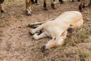 The sick and weak foal