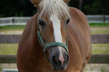正面から見た馬