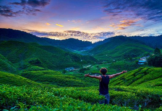 Malaysia Cameron Highlands Tea Plantations sunset