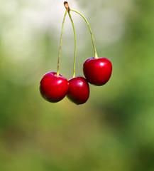 Photo of a macro of bright ripe cherries