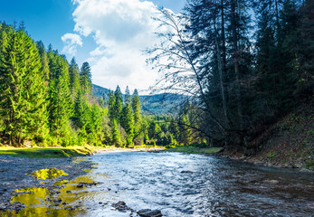 wild mountain river in forest. lovely autumn scenery of Carpathian nature