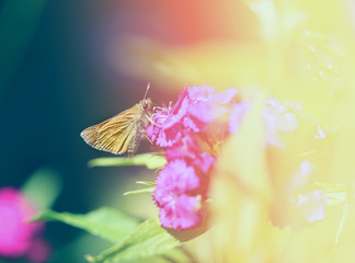 Photo of a macro golden butterfly