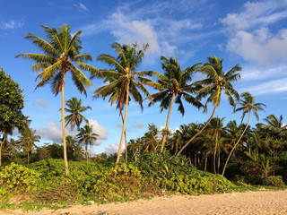 Sri Lanka paradise beach with white sand, Palm trees and a scenic sunset