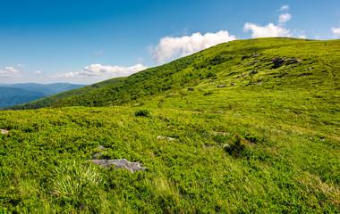 alpine meadows on the mountain top. beautiful summer landscape