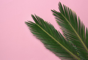 Beautiful tropical leaves on color background, top view