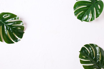 Tropical leaves on white  textured  background.
