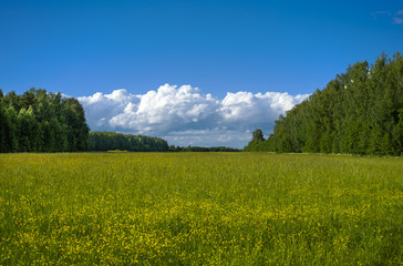 Field and forest by summer