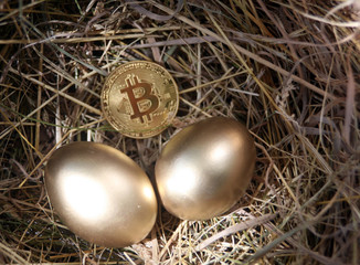 bitcoin in the nest with Golden eggs